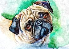 Sad pug. Dog waiting for owner. Portrait. Painting wet watercolor on paper. Naive art. Abstract art. Drawing watercolor on paper. Sad pug. Portrait. Dog waiting stock illustration