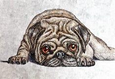 Sad pug. Portrait. Painting wet watercolor on paper. Naive art. Drawing watercolor on paper. Sad pug. Portrait. Painting wet watercolor on paper. Naive art royalty free illustration