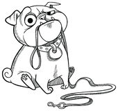 Sad pug puppy. Sitting with dog-lead in it's mouth and asking for a walk. Cartoon character. Vector illustration royalty free illustration