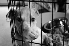 Sad pup in a cage. Sad pup with his paw up looking out of his cage stock images