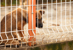 Sad puppie behind fence. Lonly and sad abandoned puppy behind fence of a enclosure in a dog shelter. Looking scared Stock Photography