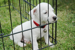 Sad puppies in a cage on the grass. Royalty Free Stock Photography