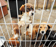 Sad puppies shelter Stock Images