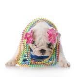 Sad puppy Stock Image
