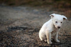 Free Sad Puppy Royalty Free Stock Photography - 22499787