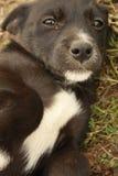 Sad puppy Stock Photos