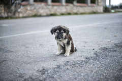 Sad Puppy. A beautiful stray mutt with overwhelmingly sad eyes Royalty Free Stock Image