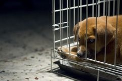 Sad Puppy In Cage Royalty Free Stock Photography
