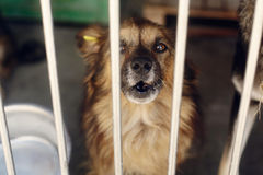 Free Sad Puppy Crying Howling In Shelter Cage, Unhappy Emotional Moment, Adopt Me Concept, Space For Text Royalty Free Stock Photography - 90681377