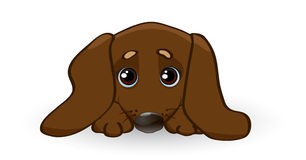 Sad puppy dachshund Royalty Free Stock Photo