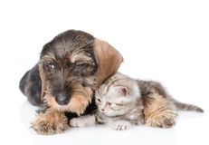 Sad puppy embracing tiny kitten. isolated on white background Royalty Free Stock Images