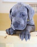 Sad puppy Royalty Free Stock Photography