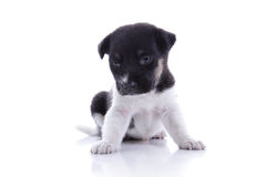 Sad puppy look down royalty free stock images