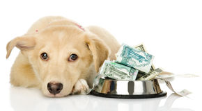 Sad puppy needing the help Stock Photos