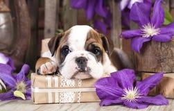 Sad puppy Royalty Free Stock Photos