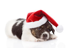 Sad puppy with santa hat. isolated on white background Royalty Free Stock Photo