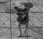 Sad Puppy in a Shelter stock images