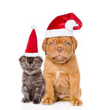 Sad puppy and small kitten in red santa hats sitting together. i Stock Photography
