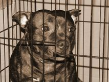 Sad purebred dog in a cage, stylized Sepia Royalty Free Stock Photography