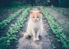 Sad red cat. Emotion Pets. Beautiful rustic red cat among the green seedlings of vegetables. Sadness and nostalgia Stock Photography