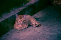Sad red cat lying Royalty Free Stock Photo