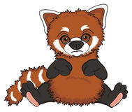 Sad red panda Royalty Free Stock Photos
