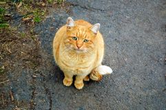 Sad red cat on a cold street. Sad redhead cat on a cold street royalty free stock image