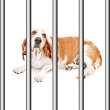 Sad Rescue Dog In Cage Stock Photos