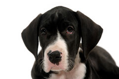 SAD sött barn för hund Arkivbild