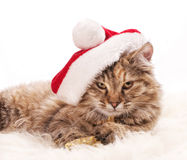Sad santa. Sad funny cat in santa's hat pn white background Royalty Free Stock Photos