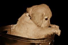 Sad In Sepia Stock Photo