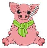 Sad and sick pig Royalty Free Stock Image