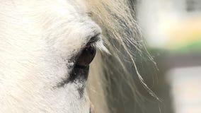 Sad Sight Horse stock footage