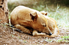Sad sleeping dog. Sleeping stray dog in dirt against tree trunk Stock Photo
