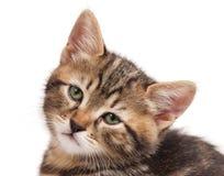 Sad small kitten Stock Photography