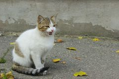 Sad Stray Cat. Cute Cat On The Road. stock photo