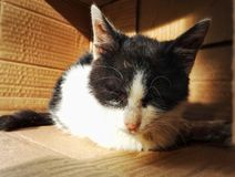 Sad stray cat. Homeless and sad stray cat in the paper box royalty free stock image