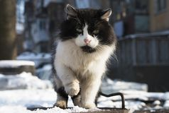 Sad wandering cat. Sad stray cat in the snow. Homeless animals have a hard winter royalty free stock image
