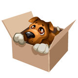 Sad stray dog cute in a cardboard box. Vector Stock Photo