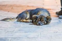 Sad stray dog on brick street. A sad stray dog lying on a stone brick street at night Stock Image