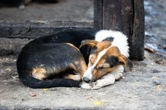 A sad stray dog on the side of the road stock images