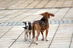 Sad stray dogs on the street Royalty Free Stock Images