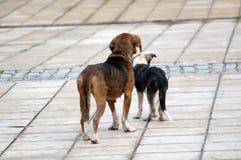 Sad stray dogs on the street Stock Photo