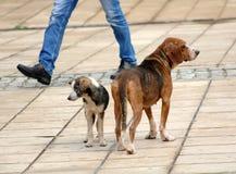 Sad stray dogs on the street Stock Photos