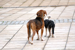 Sad stray dogs on the street Royalty Free Stock Photography