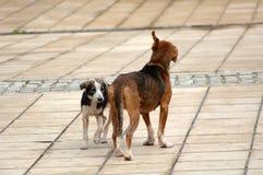 Sad stray dogs on the street Royalty Free Stock Photo