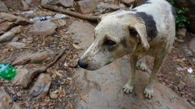Sad Street Dogs royalty free stock photos