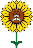 Sad Sunflower Stock Images