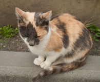 Sad tiger cat breed on the sidewalk. Little striped cat royalty free stock photos