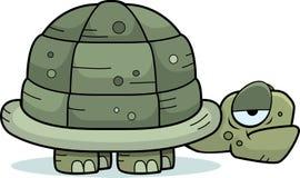 Sad Turtle Stock Photos